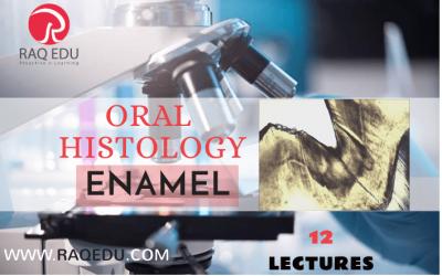 Oral histology / enamel