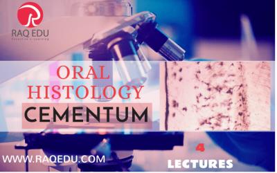 Oral histology / cementum