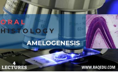 Oral histology / Amelogenesis